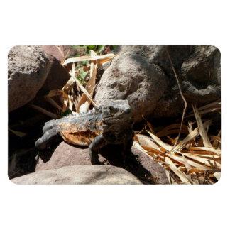 Iguana disimulada imán flexible