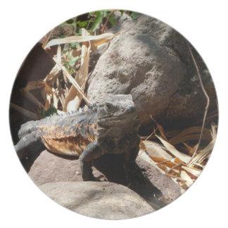 Iguana disimulada plato de cena
