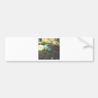 Iguana Dracon Bumper Sticker