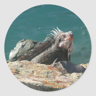 Iguana en el pegatina de St Thomas