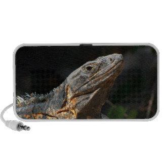 Iguana en el Sun iPhone Altavoz