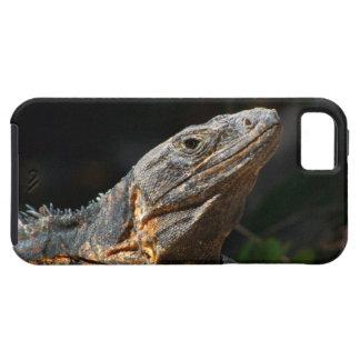 Iguana en el Sun iPhone 5 Carcasas
