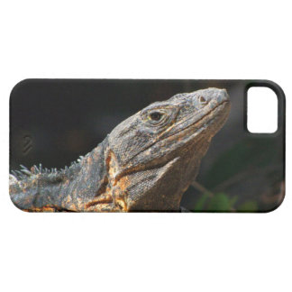 Iguana en el Sun Funda Para iPhone 5 Barely There