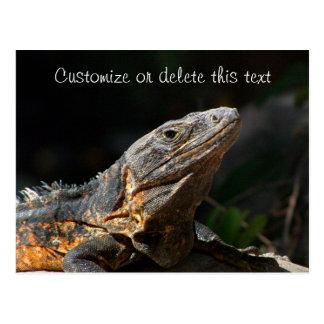 Iguana en el Sun; Personalizable Tarjetas Postales