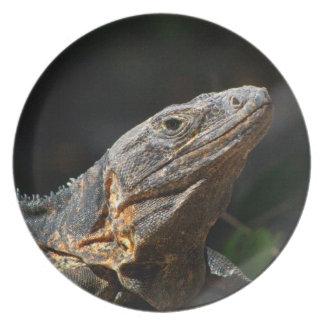 Iguana en el Sun Platos De Comidas