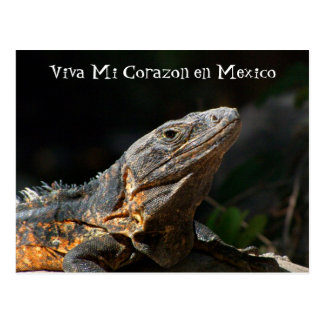Iguana en el Sun; Recuerdo de México Postal