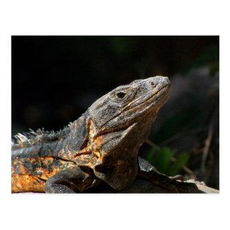Iguana en el Sun Tarjeta Postal