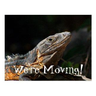Iguana en el Sun Tarjetas Postales