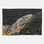 Iguana en el Sun Toalla