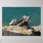Iguana en la impresión de St Thomas Impresiones