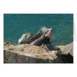 Iguana en la tarjeta de St Thomas
