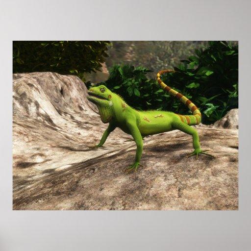 Iguana en las rocas - poster colosal (o más pequeñ