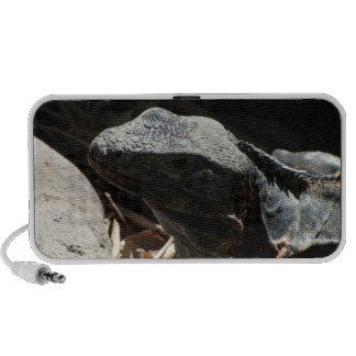 Iguana en las sombras iPod altavoz