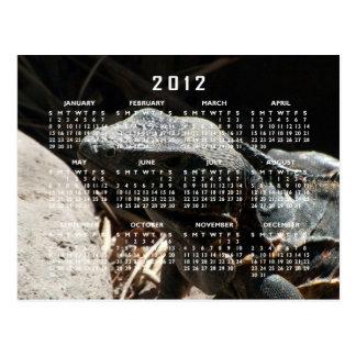 Iguana en las sombras; Calendario 2012 Tarjeta Postal