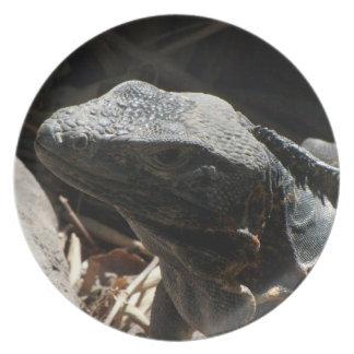 Iguana en las sombras plato