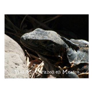 Iguana en las sombras; Recuerdo de México Tarjeta Postal
