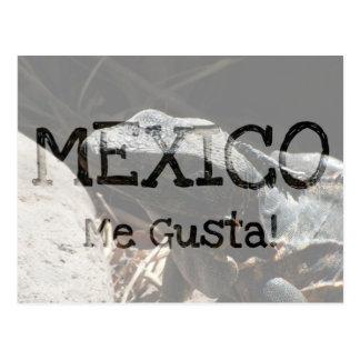 Iguana en las sombras; Recuerdo de México Tarjetas Postales