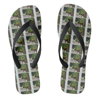 Iguana en las zonas tropicales