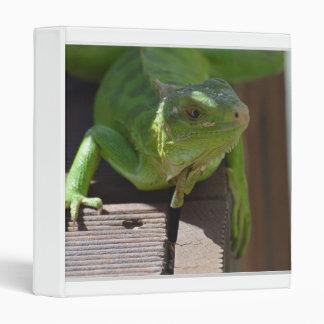 """Iguana en las zonas tropicales carpeta 1"""""""
