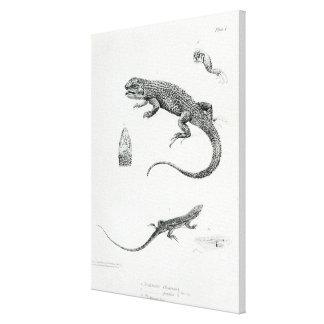 Iguana escalonada impresión en lienzo