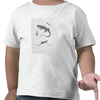 Iguana escalonada camisetas