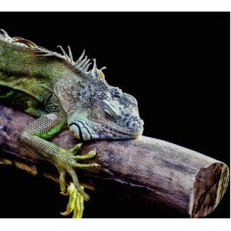 Iguana Fotoescultura Vertical