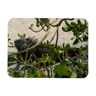 Iguana Flexible Magnets