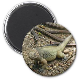 Iguana Fridge Magnet