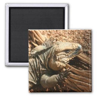 Iguana Fridge Magnets