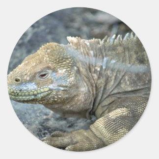 Iguana, Galapagos Islands Round Stickers