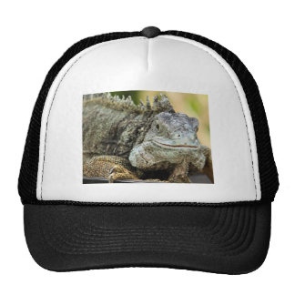 Iguana Gorras De Camionero