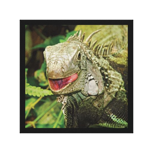 Iguana green reptile wrapped canvas canvas print