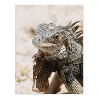 Iguana gris postal