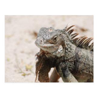 Iguana gris tarjetas postales