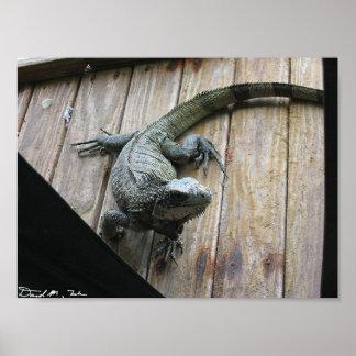Iguana hambrienta (limpieza) póster