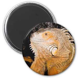Iguana iguana magnets