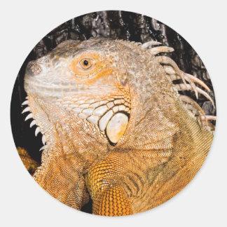 Iguana iguana sticker