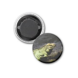 Iguana Imán Redondo 3 Cm