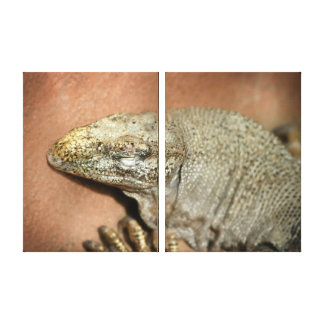 Iguana Impresion En Lona