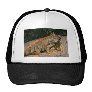 Iguana in Belize Ball Cap Trucker Hat