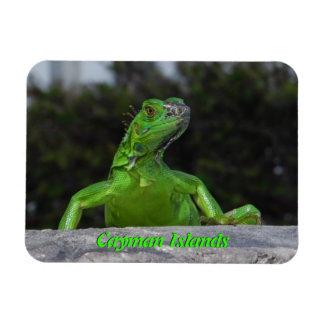 Iguana in Cayman Islands Flexible Magnet