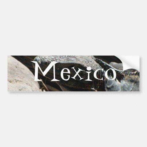 Iguana in the Shadows; Mexico Souvenir Car Bumper Sticker
