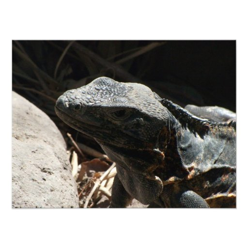 Iguana in the Shadows Photo Print