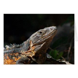 Iguana in the Sun Card