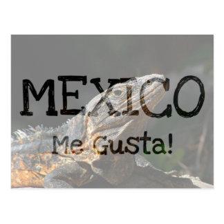 Iguana in the Sun; Mexico Souvenir Postcard