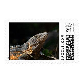Iguana in the Sun Stamp