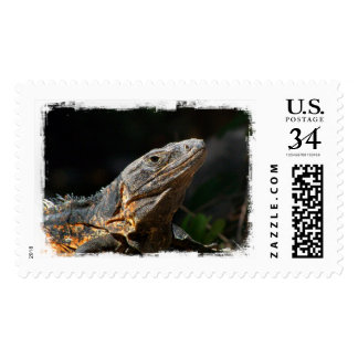 Iguana in the Sun Postage Stamp