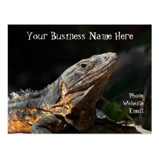 Iguana in the Sun; Promotional Postcard