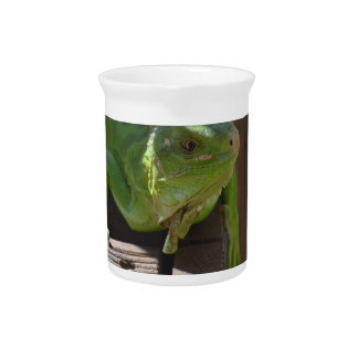 Iguana in the Tropics Drink Pitchers