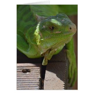 Iguana in the Tropics Greeting Card